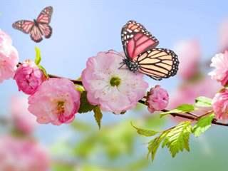 تفسير رؤية ربيع في المنام أو الحلم