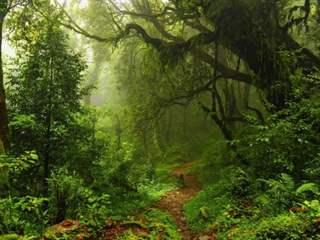 تفسير رؤية غابة في المنام أو الحلم