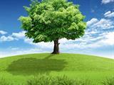 تفسير رؤية شجرة في المنام أو الحلم