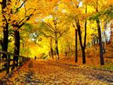 تفسير رؤية فصل الخريف في المنام أو الحلم