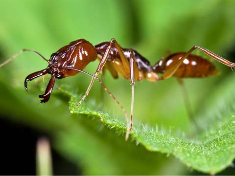 تفسير رؤية نملة في المنام أو الحلم
