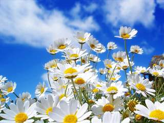 تفسير رؤية زهرة الربيع في المنام أو الحلم