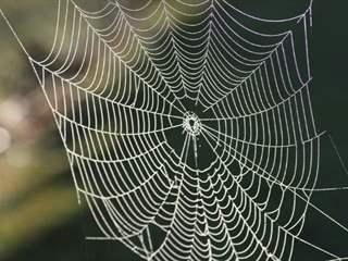 تفسير رؤية خيط العنكبوت في المنام أو الحلم