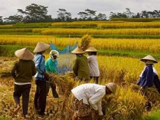 تفسير رؤية حصاد في المنام أو الحلم