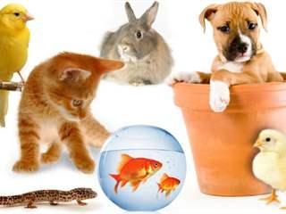 تفسير رؤية حيوان أليف في المنام أو الحلم