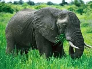 تفسير رؤية الفيل في المنام أو الحلم