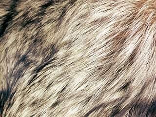 تفسير رؤية شعر الدواب في المنام أو الحلم