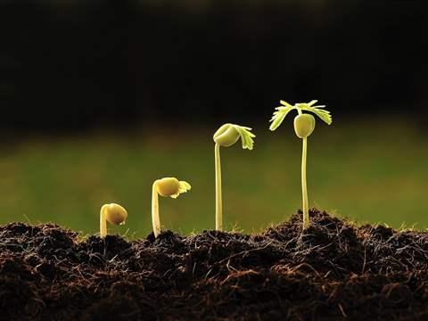 تفسير رؤية نمو في المنام أو الحلم