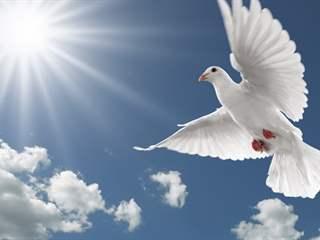 تفسير رؤية طير في المنام أو الحلم
