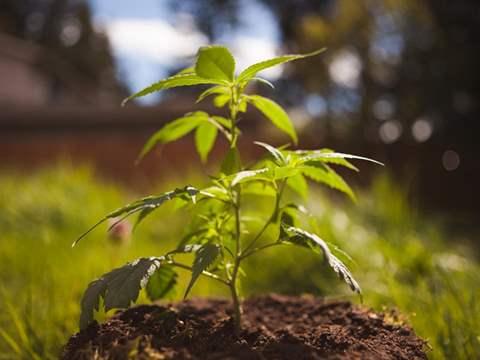 تفسير رؤية نبات في المنام أو الحلم
