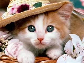 تفسير رؤية قطة أو هرة في المنام أو الحلم