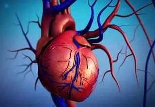 تفسير رؤية القلب في المنام أو الحلم