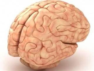 تفسير رؤية الدماغ في المنام أو الحلم