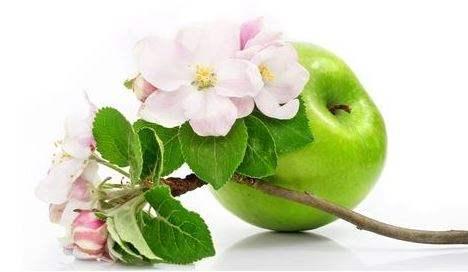 تفسير رؤية التفاح في المنام أو الحلم