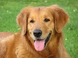 تفسير رؤية كلب في المنام أو الحلم
