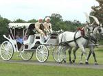 تفسير رؤية عربة حصان في المنام أو الحلم