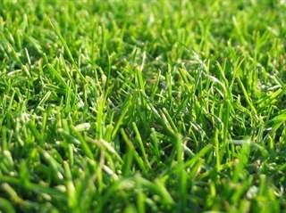 تفسير رؤية العشب في المنام أو الحلم