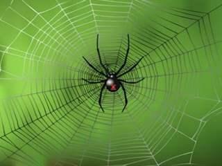 تفسير رؤية عنكبوت في المنام أو الحلم