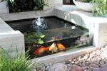 تفسير رؤية بركة سمك في المنام أو الحلم