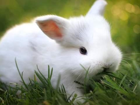 تفسير رؤية الأرنب في المنام أو الحلم