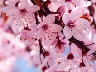 تفسير رؤية الإزهار في المنام أو الحلم