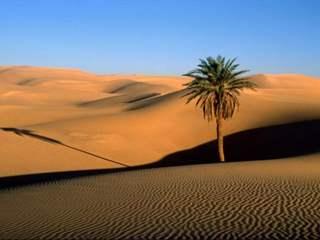 تفسير رؤية الصحراء في المنام أو الحلم