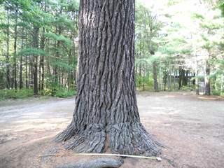 تفسير رؤية جذع شجرة في المنام أو الحلم