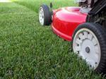 تفسير رؤية جز العشب في المنام أو الحلم